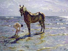 Bathing the horse