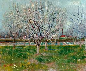 van Gogh, Vincent : Blossoming orchard