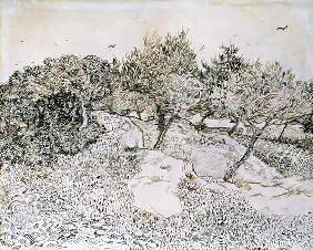 van Gogh, Vincent : The Olive Trees (pen & ink...