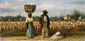 At the cotton harvest